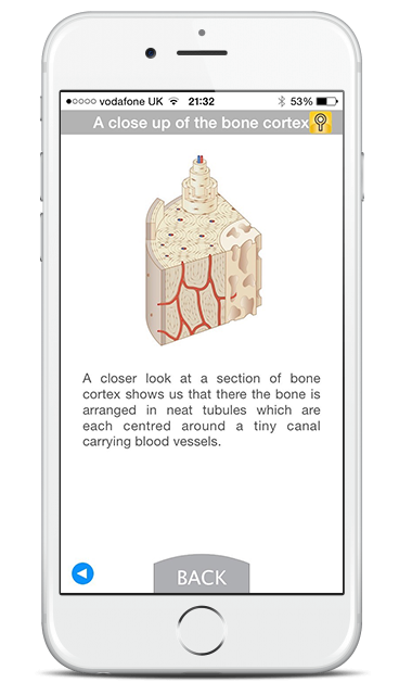 Mobile screenshot showing information about 'A close up of the bone cortex', with a cross section medical illustration