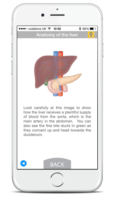 Mobile screenshot showing a description of the Anatomy of the liver